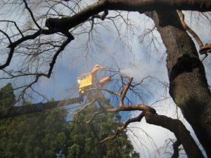 樹木クリーニング